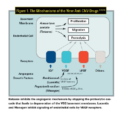 steroid drug classification