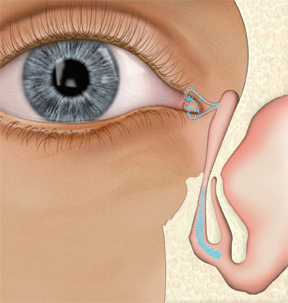 The Eye and the Nose:What's the Connection?